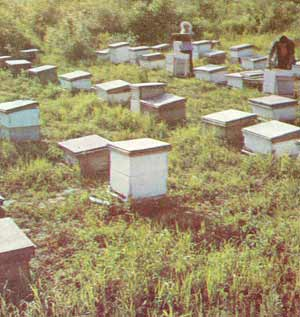 Apiary in northeast China