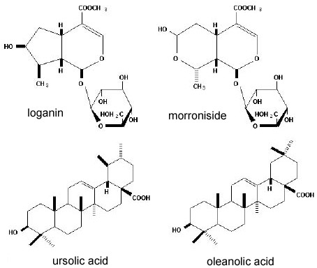 The iridoids loganin and morroniside (top) and the pentacyclic triterpenoids ursolic acid and oleanolic acid (bottom)