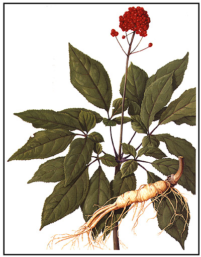 Safety Issues Affecting Chinese Herbs: The Case of Ginseng