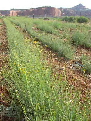 Cultivation plot at