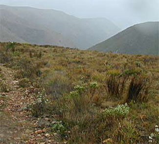 View of the Fynbos terrain.
