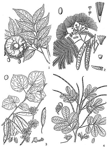 Depictions of Various Legumes