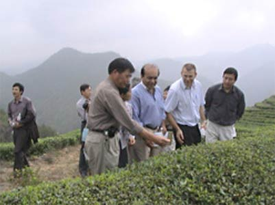 Inspectors from the United Nations at an organic tea plantation in China