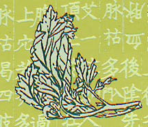 Detail of artemesia leaf from moxa pad packet